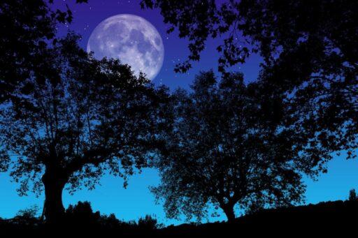 Luna llena vista desde el bosque en una noche estrellada.