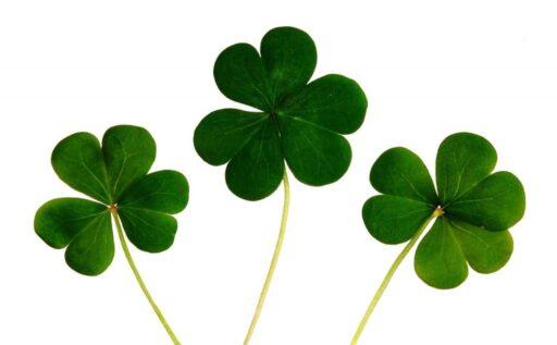 Tréboles de la suerte irlandés