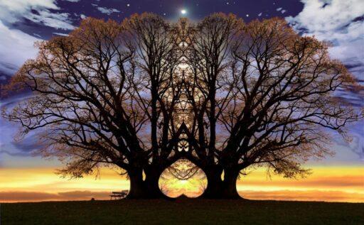 Árbol de la vida en un atardecer con efecto de espejo con su reflejo.