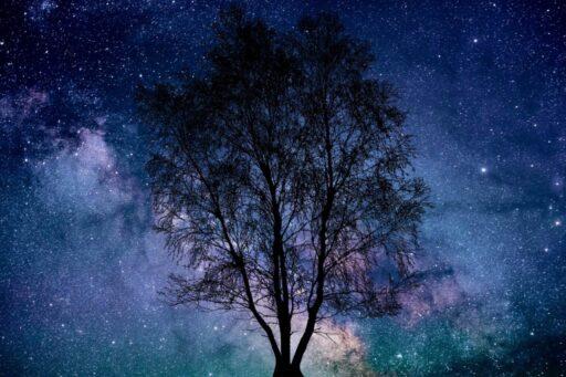 Silueta del árbol de la vida en noche estrellada.