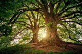 Árbol de la vida con el sol en el fondo.