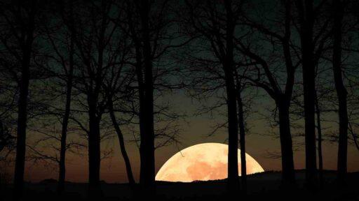 Luna llena en el bosque.